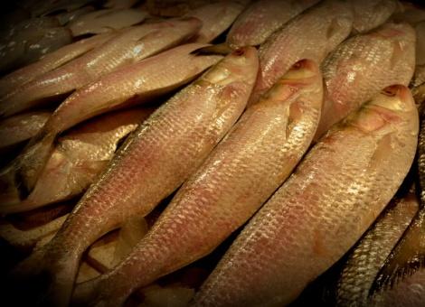 Ilish (Hilsa) at No. 2 Fish Market in CR Park, New Delhi