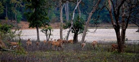 Chilla Range of Rajaji National Park