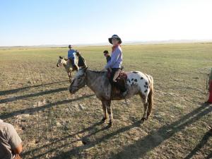 steppe horse