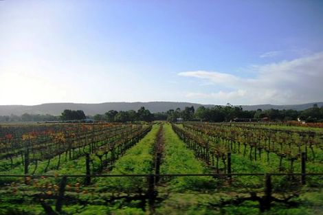 Vineyards on the Great Northern Highway in the Swan Valley wine region, Western Australia. | www.wikimedia.org