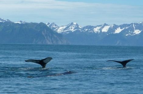 Alaska travel  Kenai